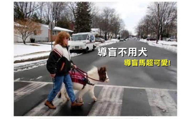 大家應該都有看過導盲犬,那.....導盲馬你看過沒有?!