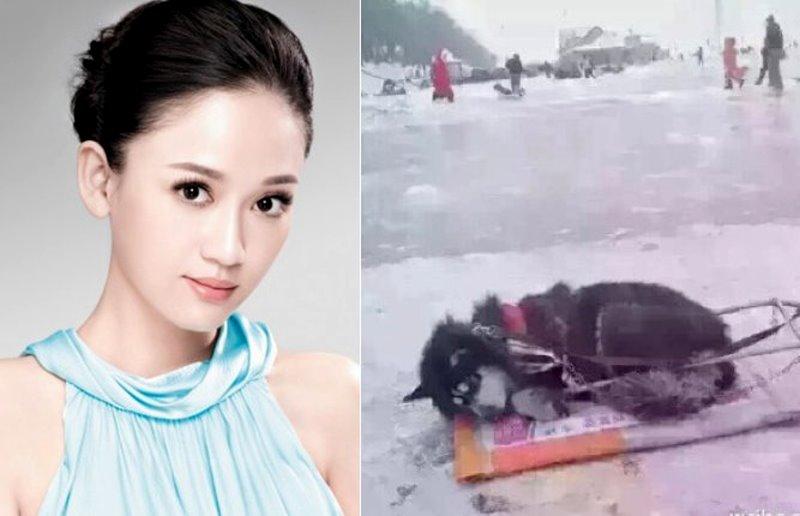 陳喬恩為了一隻狗在網路和網友對嗆,轉發破10萬次,而她被嗆了『這一句』後這樣反擊!網友都讚爆了!