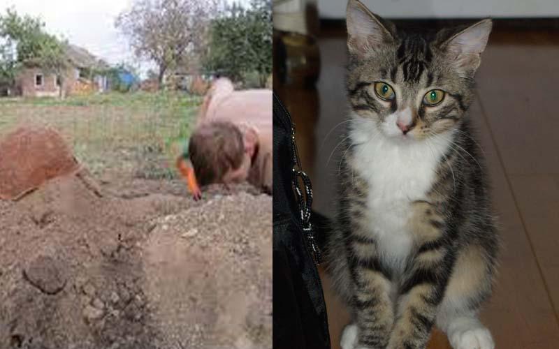 一名網友將出車禍死亡的愛貓埋在花園裡,但幾個小時後他的貓竟然自己回到家裡?!挖開墳墓一看竟發現.......  -