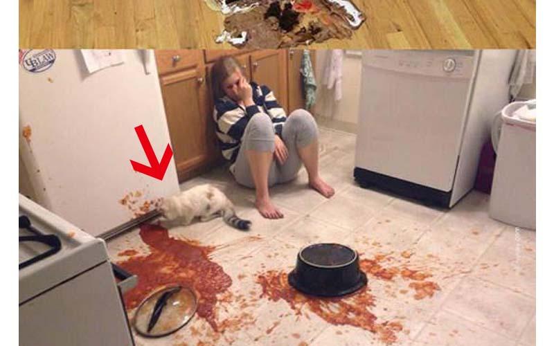 18張悲劇照片告訴你從天堂到地獄的悲傷啊..上一秒才剛煮好,下一秒竟然...  -