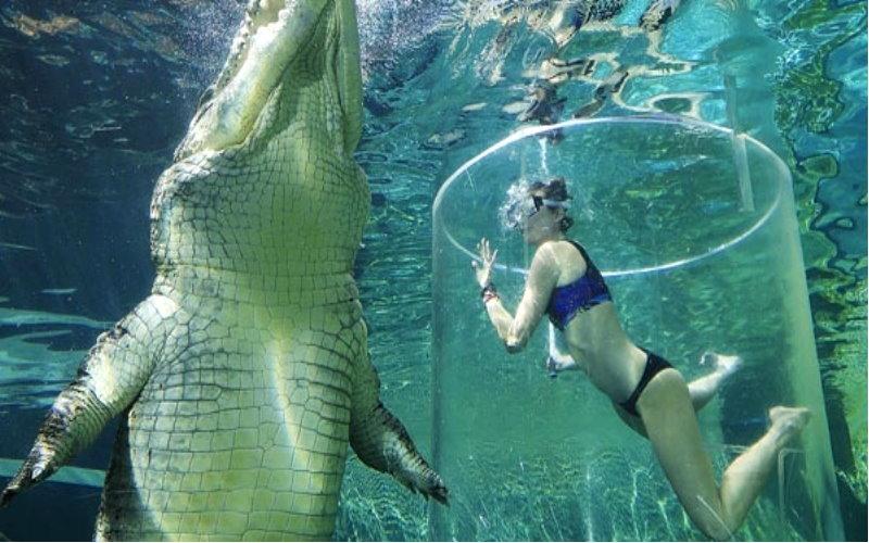 主題公園開放「死亡之籠」讓遊客與鱷魚一起潛水,果然是勇者才敢嘗試阿!  -