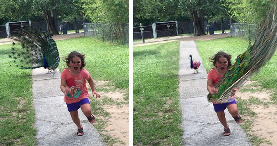 媽媽把5歲女兒「被孔雀開屏嚇到落荒而逃」的照片傳到網路上,接著擅長修圖的網友們又開始狂歡了...!!! - 第1頁
