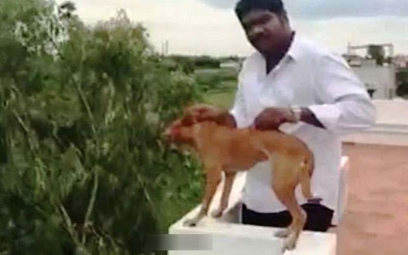 把小狗抓到高樓屋頂「冷血地把牠推下去」,網友瘋狂肉搜出本人後沒想到他的身分竟然是…天啊!