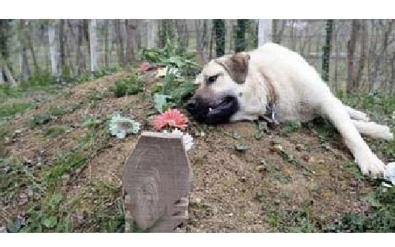「狗狗是人類最忠實的朋友」男子某日到爸爸墓上竟看到一隻狗趴在墳墓旁,知道原因後哭慘了!