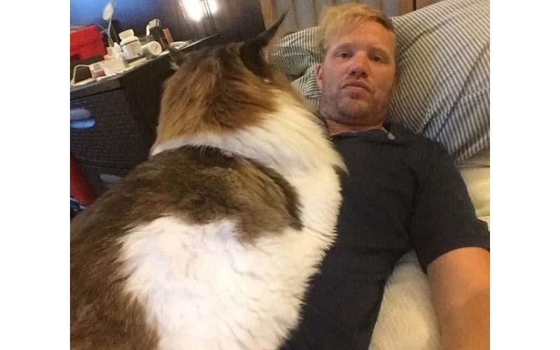 「貓界中的姚明」這隻比嬰兒還巨大的貓咪,到底是如何養的呢?