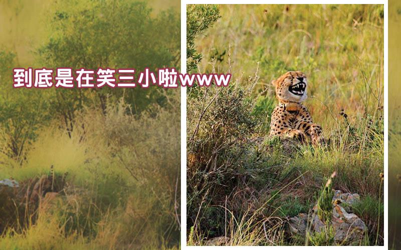 一張搞笑野生動物攝影作品「是在笑三小啦」引起網友熱烈圖讚!看到差點笑死XD