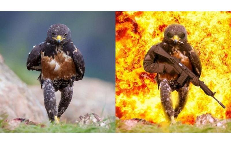 老鷹的英姿太帥被拍下,竟又讓網友瘋狂暴動…掀起一場超激烈「PS大戰」!
