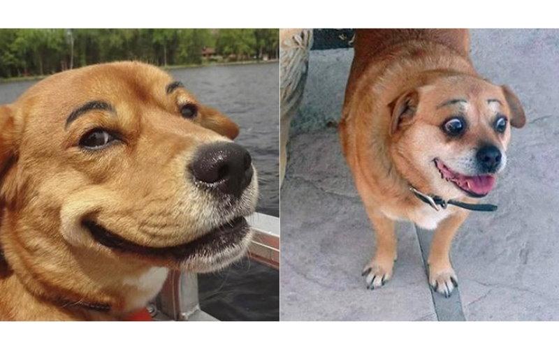 這隻有眉毛的狗莫名喜感爆發!讓人看了無法止住笑意:笑到美叮噹!