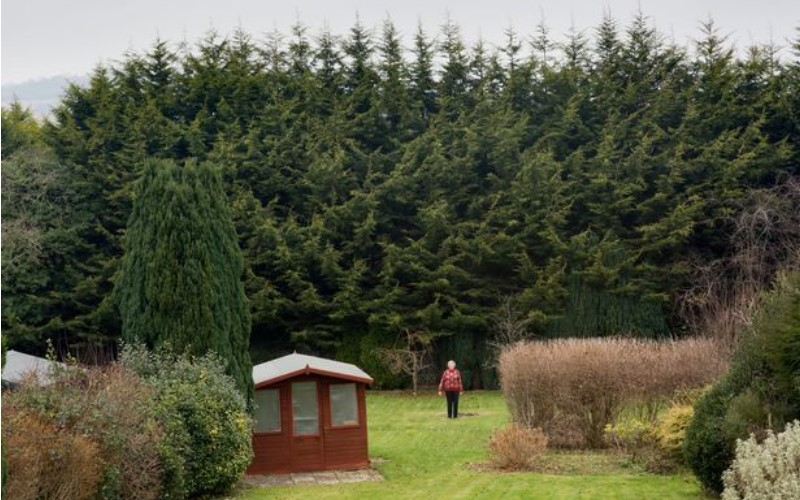 史上最愛記仇!英國一位小氣歐巴桑處心積慮「佈局了20年種樹」 就為了報復鄰居!