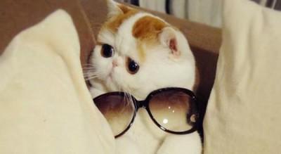 紅小胖戴墨鏡。