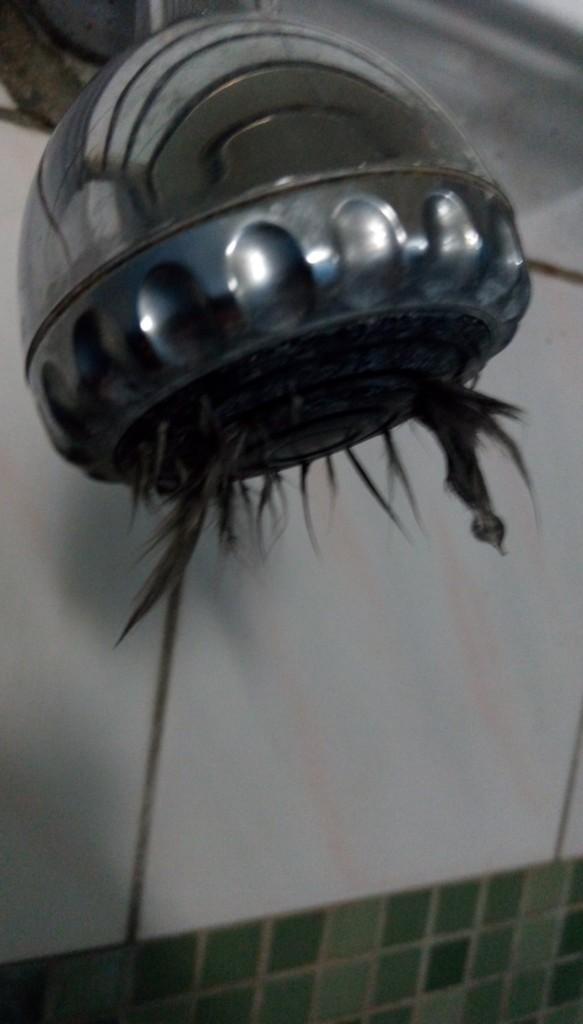 他洗澡开莲蓬头竟 炸出黑毛 崩溃 洗屍水 却发现更噁心的事情还在后头
