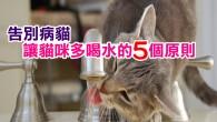 貓的祖先來自沙漠環境,並且能藉由獵物來獲得充足的水份(血液),但是,現代的貓吃的是水含量只有 10% 左右的乾糧,所以要改變習慣去飲用額外的水就變成了一個問題。貓咪普遍來說並不愛喝水,通常 1 天的飲水量不到 40c.c. ,可是根據動物輸液學,貓每公斤的體重就需要 40c.c. 到60c.c. 的水,才可以有效避免包括泌尿道、腎臟和肝臟方面的疾病。 一、良好的水質 對於挑剔水質的貓咪你應該每天都更換飲水, 1 天能夠換到 3 次以上,並且每天都要用肥皂水洗碗,徹底沖洗後再重新注入水。只有補充而沒有清洗的水不僅不好喝,還可以被污染。 二、多地點的供應 你可以準備更多的飲水器,並且放在家中的任何地方,讓貓咪不管走到哪裡都會看到水。不過,要注意那得是乾淨與安靜的場所,人來人往的走道和吵雜的冰箱壓縮機聲都會讓牠們感到壓力而不去喝水。 三、把水加進食物 作為《動物星球》資料庫主要來源的網站《PetEducation.com》, Drs. Foster & Smith 提供這個最直接有效的方法。只是,有些貓並不喜歡食物中有額外添加的水,如果是這樣你就需要作其他嘗試,而不是讓牠們不吃東西。 四、多變的供水設備 你能試著用塑膠、陶瓷、不鏽鋼,馬克杯或玻璃杯等任何容器來裝貓的飲用水,甚至是提供過濾水、蒸餾水或瓶裝水等不同的品質,來找出牠們最喜歡的搭配。另外,大部份的貓都會被流動的水吸引,所以除了電動飲水器,將碗放在緩慢滴水的水龍頭下也是可以考慮的方法。 五、邊玩邊喝 最後,也建議你在夏天的水中放些冰塊,愛玩的貓咪就能在享受敲擊的過程中,透過舔濕掉的爪子來補充水份。你也可以直接將低鈉雞湯作成冰塊,但同時要確保有其他乾淨單純的水給牠們選擇。要特別注意的是,牛奶並不能代替水,貓咪將會因此脫水,而且許多的貓在斷奶後就有乳糖不耐症,在頻繁地拉肚子以後也可以導致脫水。 ByENL小編-肉肉