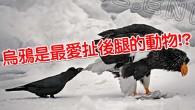 烏鴉神煩啊XDDD根本就是鳥類界的中二小白嘛! […]