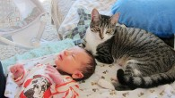 當家族裡有小寶寶即將誕生,每個人都會滿心期待新成員的到來。但 […]